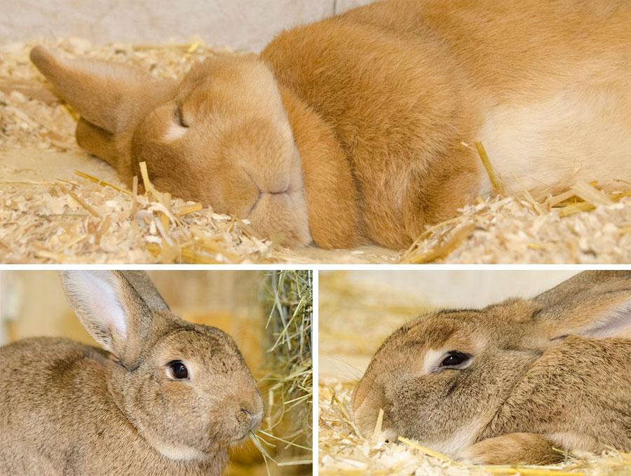 Partnervermittlung kaninchen